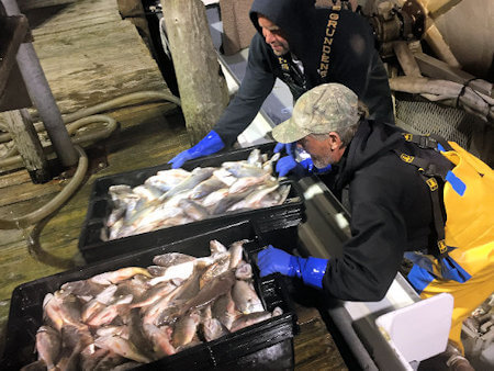 Fresh Catch Wholesale Seafood